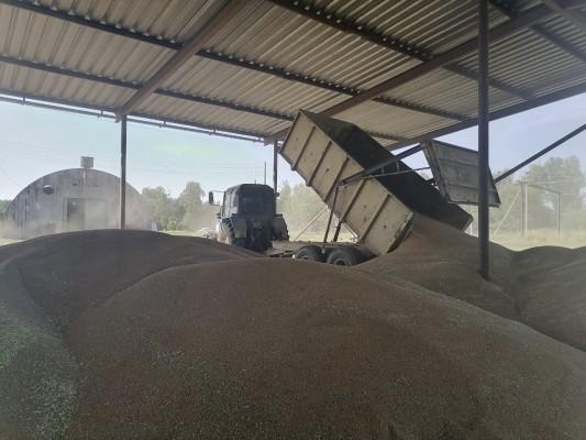 В учебно-производственном сельскохозяйственном участке КП-7 УФСИН России по Орловской области идет уборка урожая